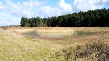 North Heath - the former gravel extraction area is now a pond and open grassland (Tim Hill)