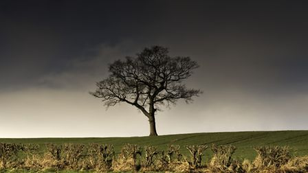 Oak trees dominate the landscape (Getty Images/iStockphoto)
