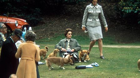 Part of the family: The Queen, Princess Anne and corgis enjoying a leisurely afternoon in 1969. Phot