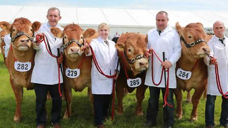 This team of Limousin cattle took first prize in the Best Team of Four competition: Jock Wyllie of S
