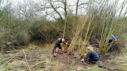 Volunteers reclaiming the old farm pond that once linked to a network of drainage ditches (Photo: cm