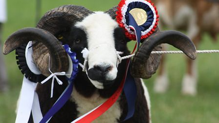 There's lots to see at the Totnes and District Show