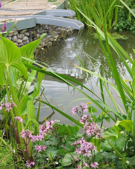 The Wildfowl and Wetland Trust garden