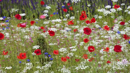 The strawberries and cream meadow