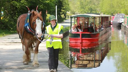 Nicky Lincoln leads 'Tappy' at Llangollen Wharf