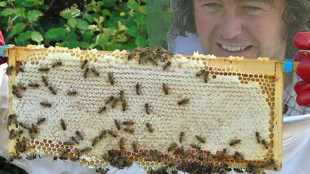 In her short six-week life each worker bee will produce just one twelfth of a teaspoon of honey hers