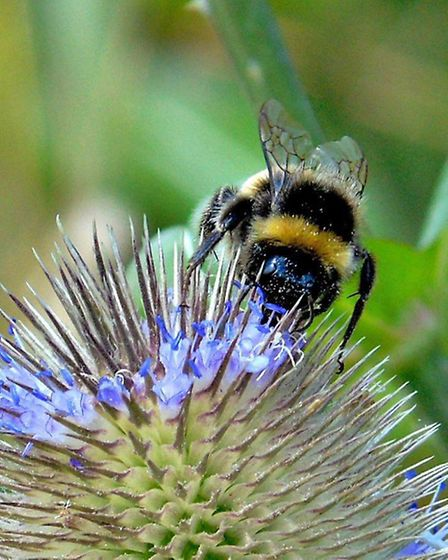 Pollinators' Month celebrates the amazing insects that not only help wild and garden flowers reprodu