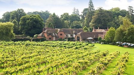 Take a wine and cheese tour at Three Choirs Hampshire Vineyard