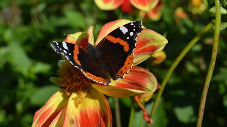 5-Aug---Butterfly-Family-Day