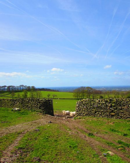 The view from Moorside Lane