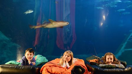 Sleeping with sharks at the National Marine Aquarium in Plymouth