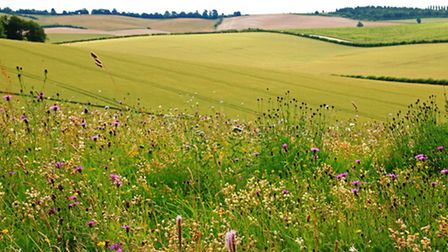 Wildflower-filled field edges are a vital habitat for both birds and bees - farmers receive a grant