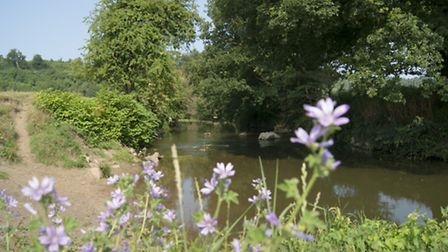 A perfect place for a summer stroll, our guided walk across Norbury Park takes in lovely views of th