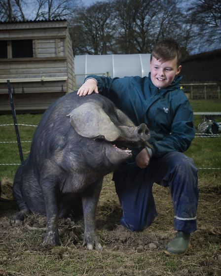 Farms for City Children piece - a charity set up by Michael and Clare Morpurgo, which is celebrating