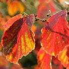 Take time to enjoy autumn leaves close up