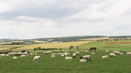 Just like Sparsholt have their and dairy farms, they are looking to create a gas farm