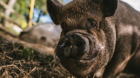 Jo Bailey's book 'Sam and Chester', which tells the story of how a mischievous pig called Chester transformed the life of...