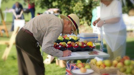Judging competition entries at Chorleywood Apple Day (Andrew Bungard)
