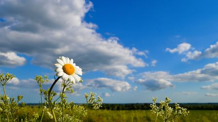 """Flora Category: 1st Place: Jose Perefan from Harrietsham. Oxeye daisy """"The different viewpoint of th"""