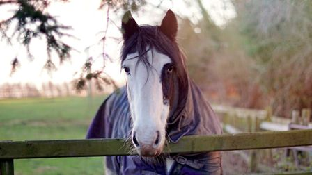 A rug will keep a horse warm in winter, as will hay, the digestion of which creates internal heat (M