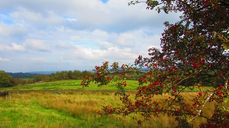 View from the Gritstone Trail