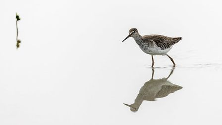 Redshank, just one of the birds you can spot at the River Lee County Park (EarnestTse/iStock/Thinkst
