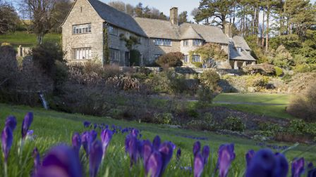 A view of the house across the garden with purple flowers in the foreground