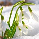 You might catch an early sight of snowdrops at Gatton Park (Photo: Getty Images/iStockphoto/Dovapi)