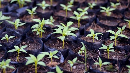 Get growing from local seeds. Picture: anakeseenadee/Getty Images/iStockphoto
