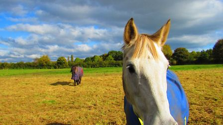 A friendly horse in a field in Great Warford says hello