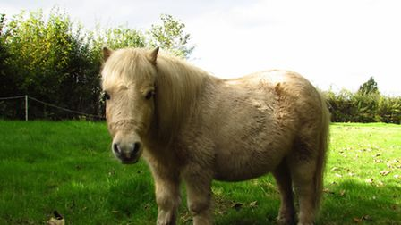 Is this the cutest horse ever? I could hardly tear myself away