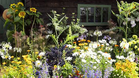 You can't get more local than growing flowers in your own garden