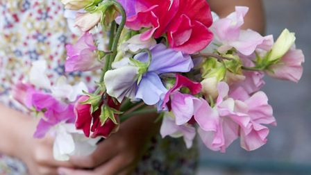 Everyone loves a bunch of sweet peas
