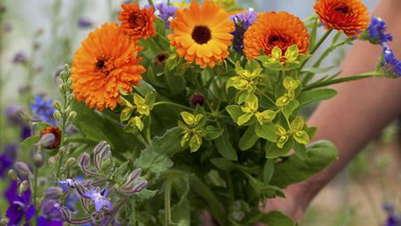 Calendula are a great option for a vibrant bouquet