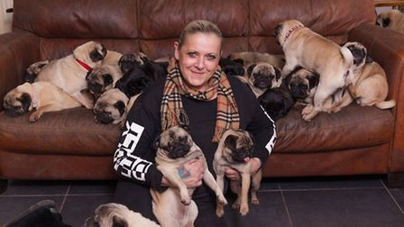 Becca Drake with some of her pugs at home in Sandbach