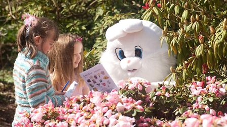 Borde Hill Easter Bunny