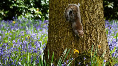 The shot that won Jayne Jones the 2016 readers' photography competition in Cheshire Life