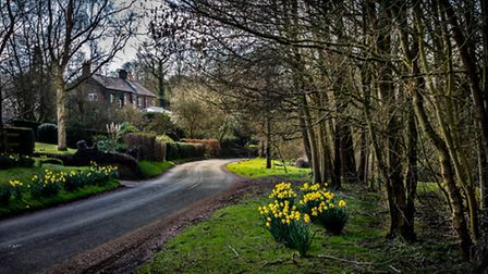 Signs of Spring in Little Bollington by Chris East, Lymm