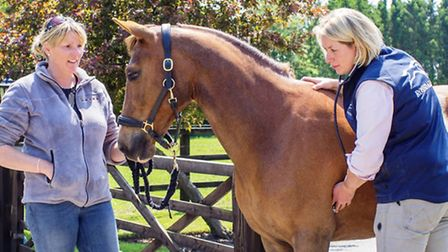 Susanna Ballinger checking a horse's heart (All images Rossdales Herts)