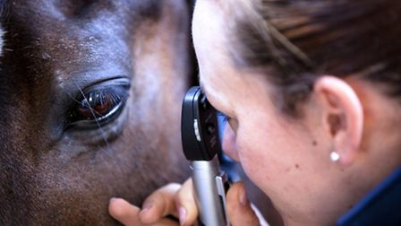 Using an opthalmoscope to inspect a horse's eye during vetting