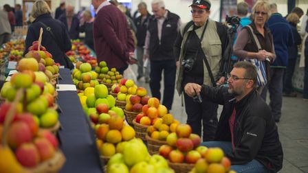 A visitor photographs an apple display on Apple Day 2014 at RHS Garden Rosemoor.