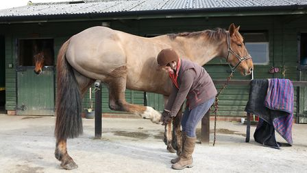 Training a horse to lift their feet for a farrier