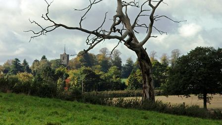 View towards Albury and the distinctive needle spire of St Mary's (photo: Ray Murdoch)