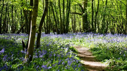 There are pockets of ancient bluebell woods (photo: Woodland Trust)