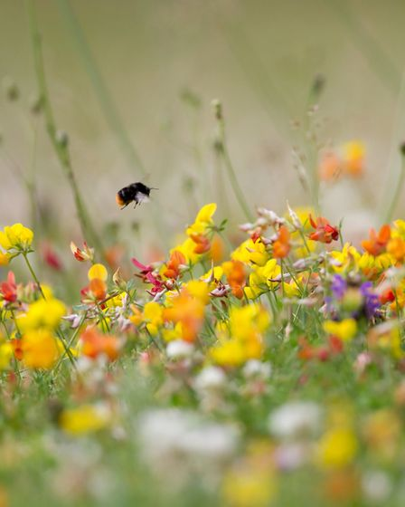 Planting with wildlife in mind will bring your garden to life (photo: Rob Hopkins)