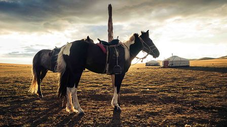 Horses on the Mongolian steppe (photo: amhogas, Getty Images/iStockphoto)