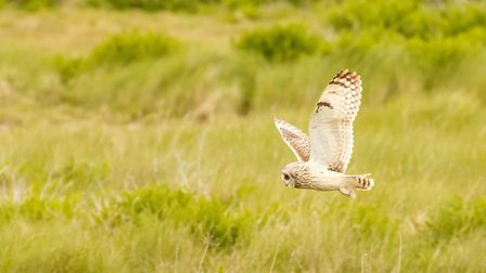Short Eared Owl at Farlington Marshes by James West (creativecommons.org/licenses/by-nc-nd/2.0) via