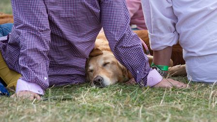 Dogs are on show as well as just having a snooze