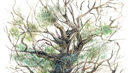 The Fredville Oak, known as 'Majesty', is in the woods of a private estate at Nonington, near Canter
