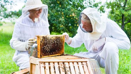 Hosting a hive gives the opportunity to learn from an experienced beekeeper (photo: kzenon, Getty Im